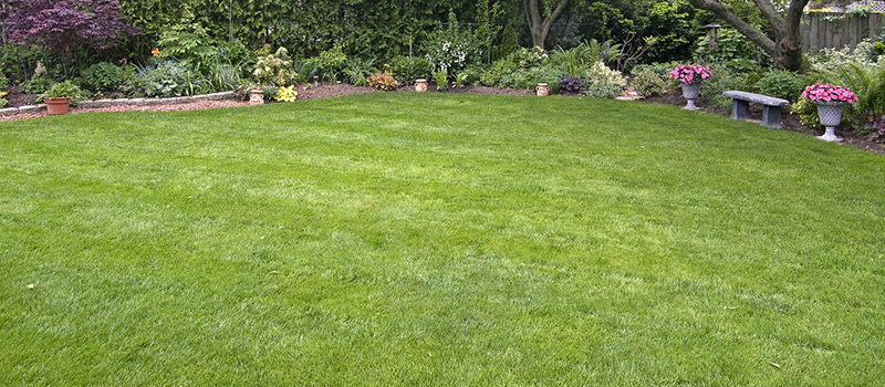 Top 4 Summer Sod Tips for Central Florida Lawns