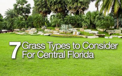 7 Grass Types to Consider for Central Florida