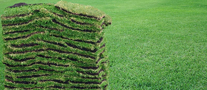6 Steps for Turfgrass Installation in Central Florida