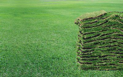 Installing A New Lawn In Orlando