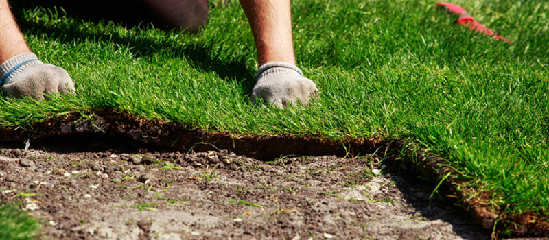 When You Should Plant Sod in Central Florida