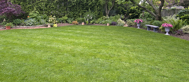 Best Sod Choices for the Orlando Florida Area