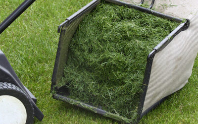 Should I Use A Grass Catcher When Mowing?