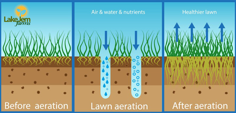 The Benefits of Aeration for Central Florida Lawns